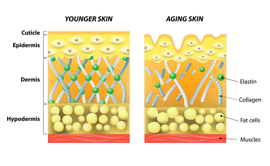 keto collagen in skin