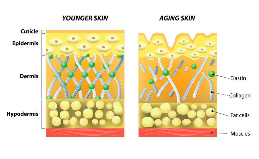 keto collagen in skin